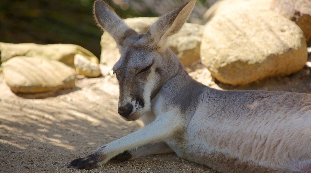 Taronga Zoo featuring zoo animals