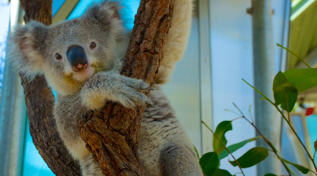 Taronga Zoo which includes zoo animals and cuddly or friendly animals