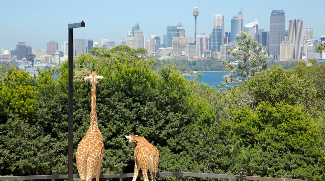 Taronga Zoo which includes a skyscraper, zoo animals and land animals
