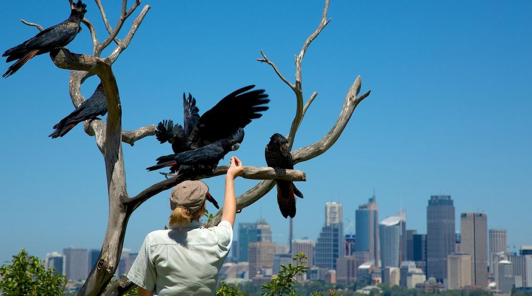 Taronga Zoo which includes bird life, skyline and a city