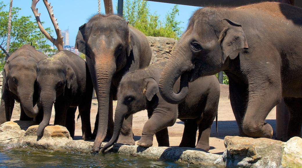 Taronga Zoo showing zoo animals and land animals