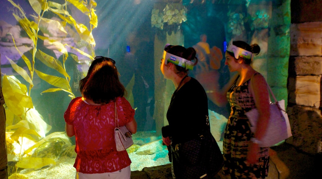 Sydney Aquarium showing marine life and interior views as well as a small group of people