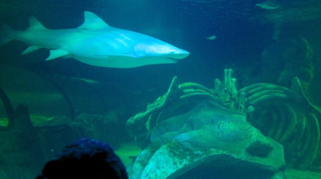 Sydney Aquarium featuring marine life