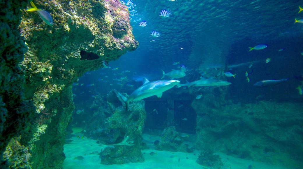 Sydney Aquarium featuring marine life and colourful reefs