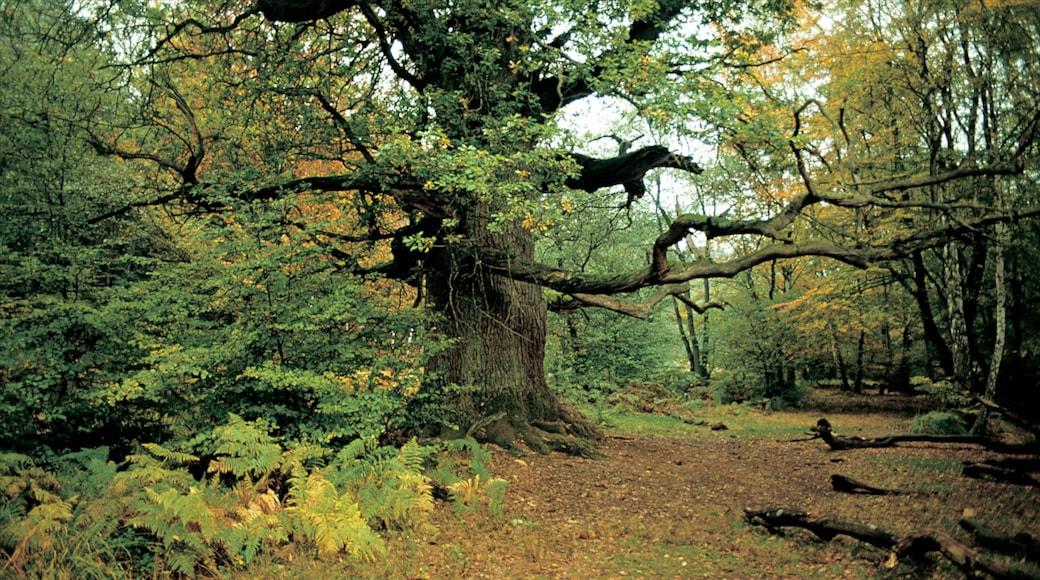 Kassel mit einem Wälder, Herbstfarben und Landschaften