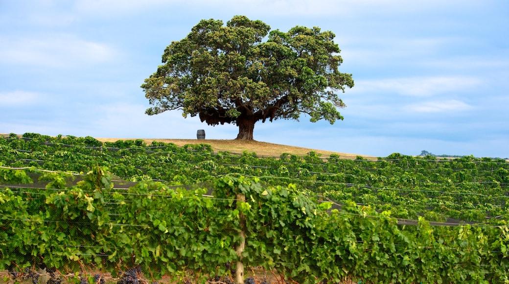 Waiheke Island which includes landscape views and farmland