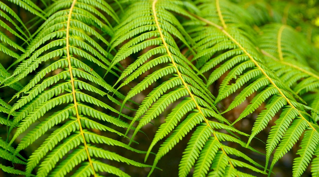 Waitakere Ranges featuring tropical scenes and forests