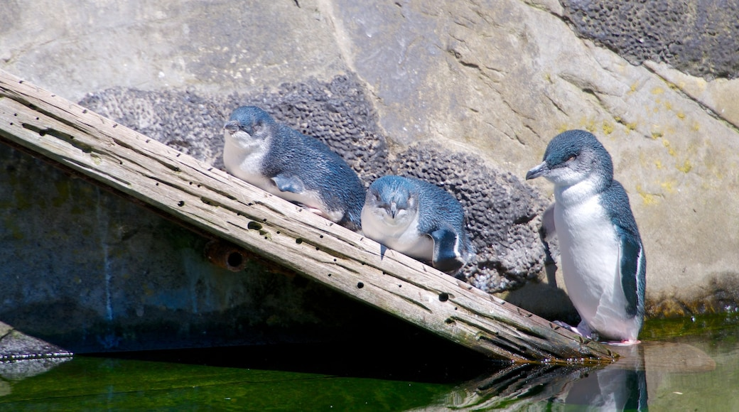 Auckland Zoo showing bird life and zoo animals