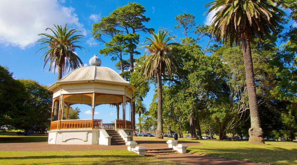 Auckland Domain showing a garden