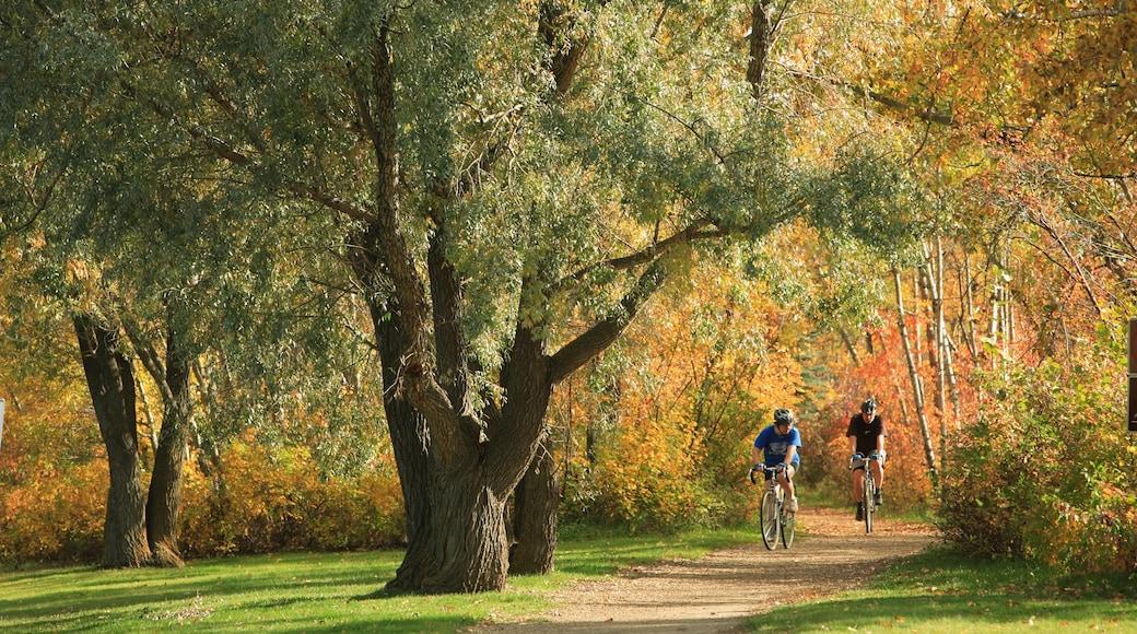 Edmonton mostrando los colores del otoño, escenas forestales y un parque