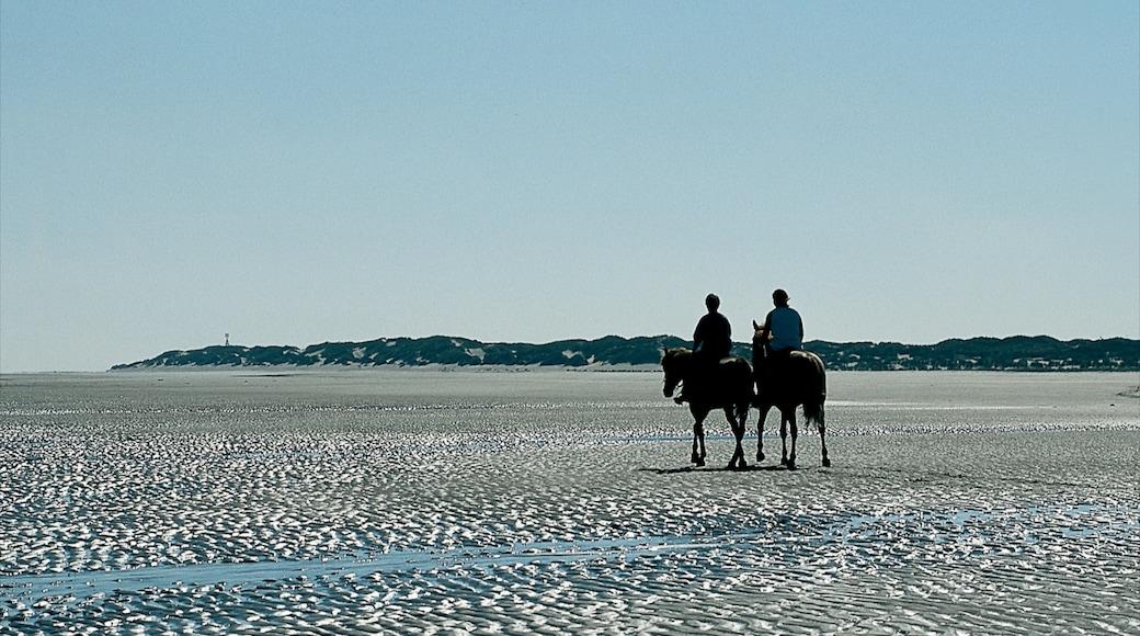 Langeoog welches beinhaltet Reiten, Landschaften und Strand