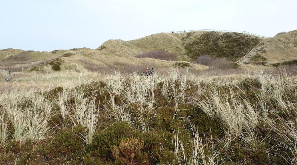 Langeoog welches beinhaltet Landschaften und ruhige Szenerie