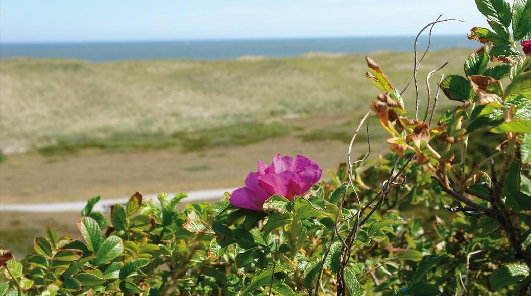 Langeoog das einen allgemeine Küstenansicht, Landschaften und Blumen