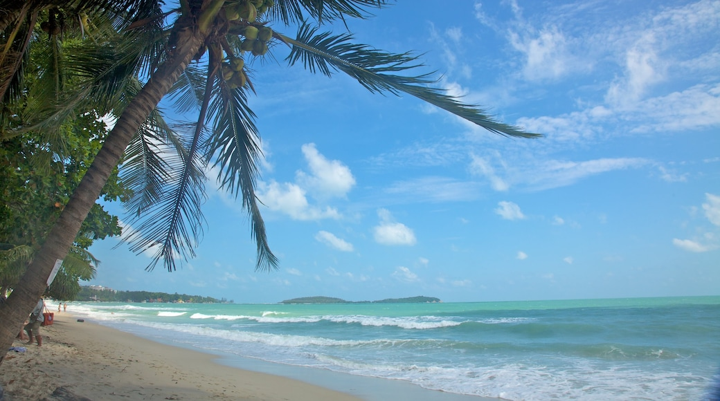 Koh Samui which includes tropical scenes, general coastal views and landscape views