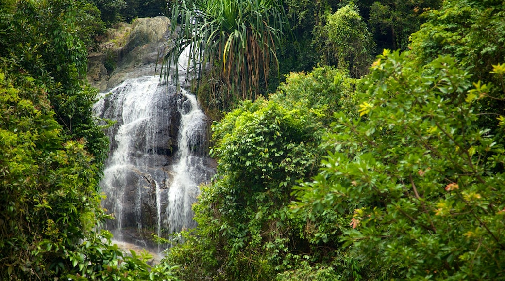 Koh Samui showing forests, a cascade and landscape views