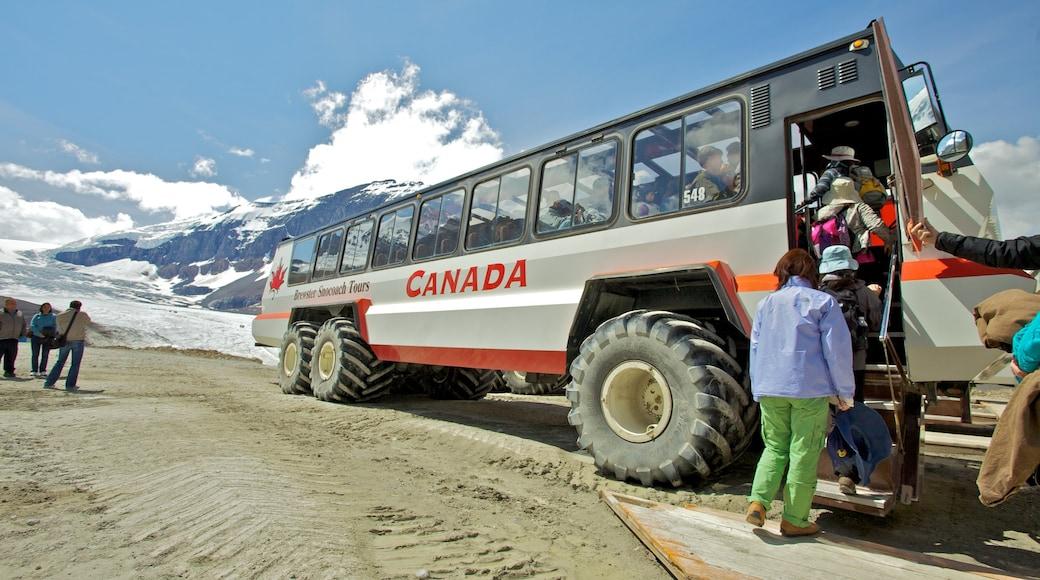 哥倫比亞冰原 设有 旅遊車觀光 以及 一大群人