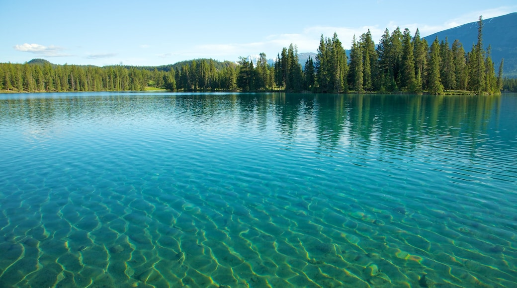 Jasper National Park which includes forest scenes, landscape views and a lake or waterhole