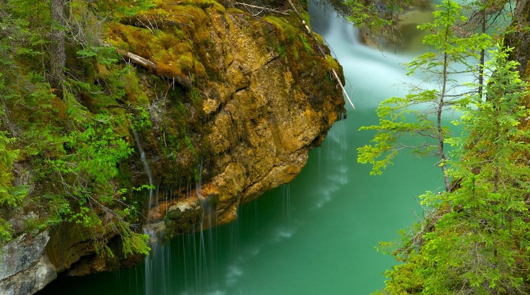 Cañon del Maligne que incluye un río o arroyo, un barranco o cañón y vistas de paisajes