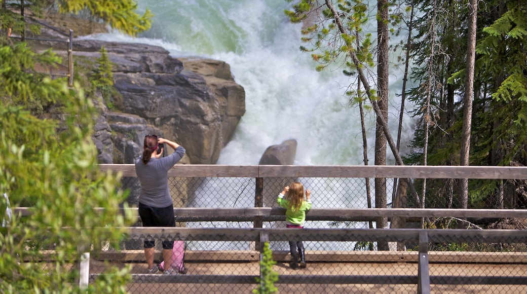 Sunwapta Falls featuring landscape views, views and a waterfall