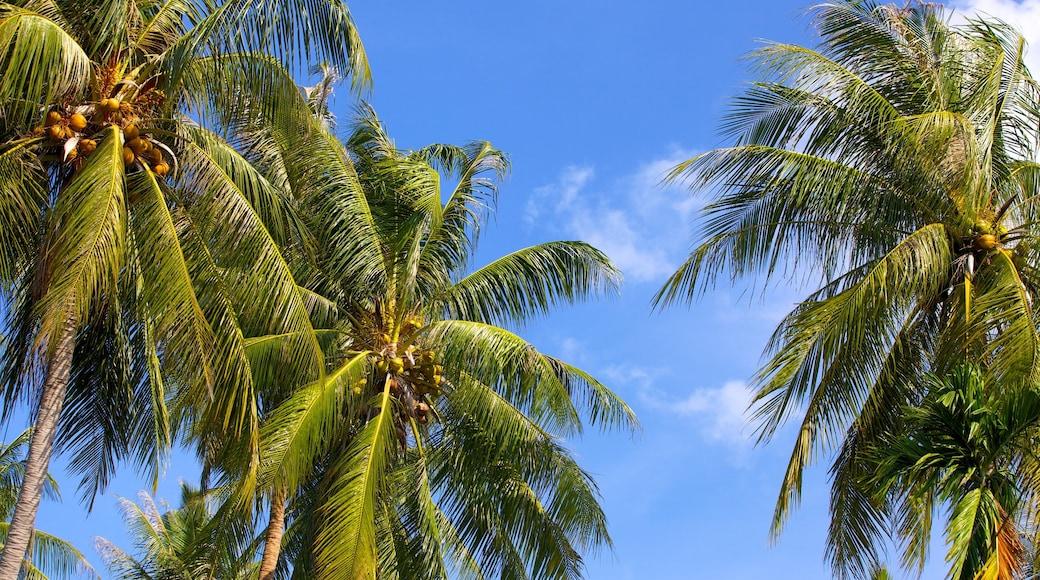 Pangka Beach inclusief tropische uitzichten
