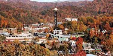 Gatlinburg featuring forests and a small town or village