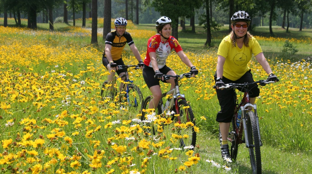 Birmingham showing cycling, a garden and wildflowers