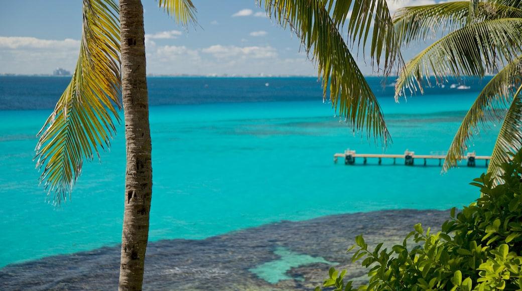 Garrafon Natural Reef Park featuring general coastal views and tropical scenes