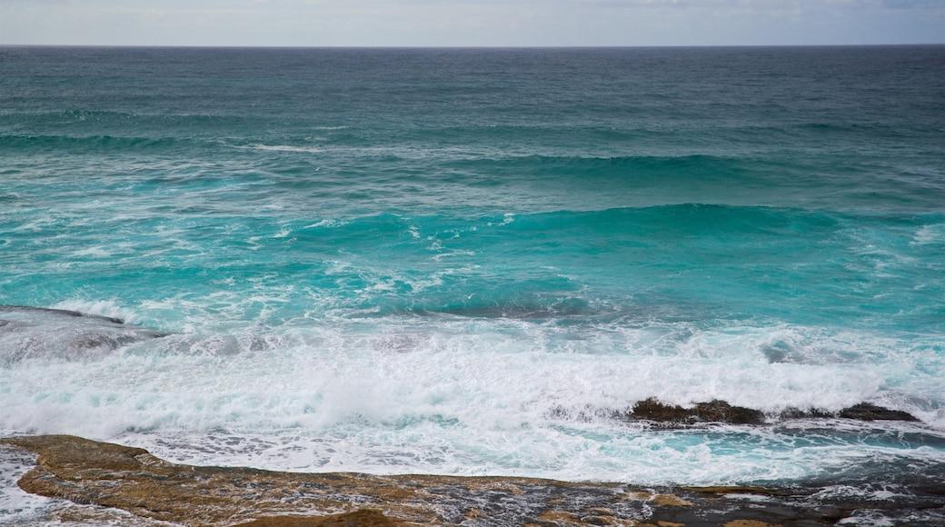 Tamarama Beach which includes general coastal views