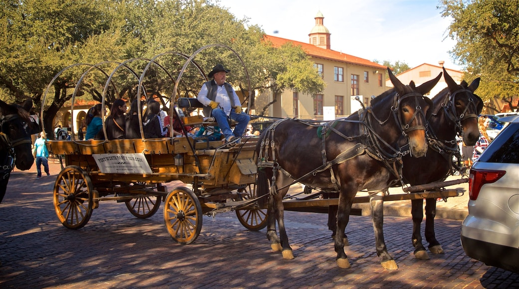 Fort Worth Stockyards featuring horseriding and land animals as well as a small group of people