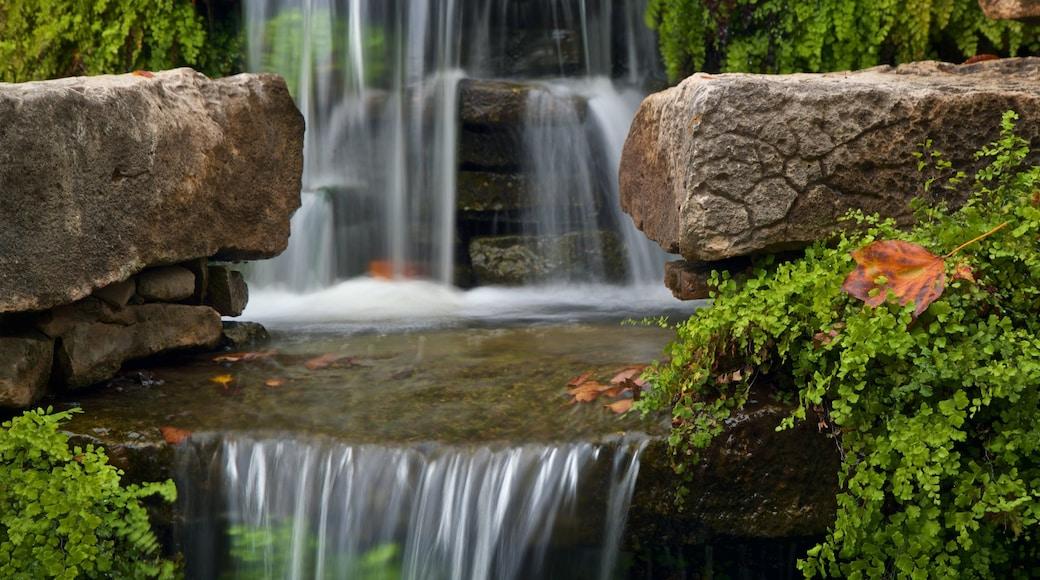 Fort Worth Botanic Garden featuring a fountain