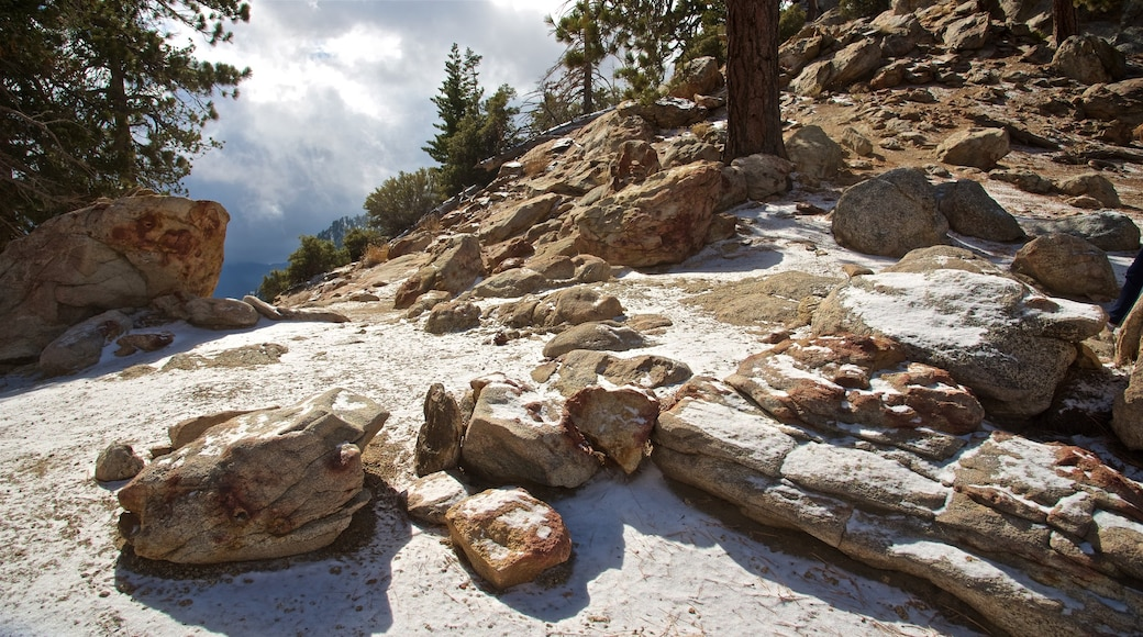 Mount San Jacinto State Park which includes mountains and tranquil scenes