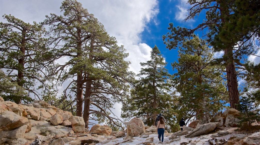 Mount San Jacinto State Park showing hiking or walking and tranquil scenes as well as a couple