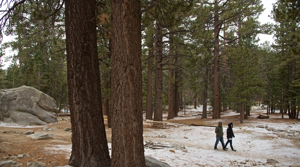 Mount San Jacinto State Park which includes hiking or walking and forest scenes as well as a couple