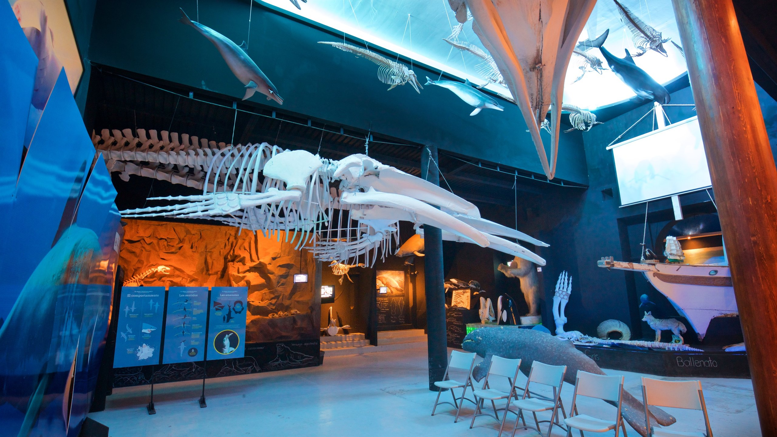 Videos, photos and large collection of whale and turtle skeletons provide a fascinating insight into the region's extraordinary aquatic life.