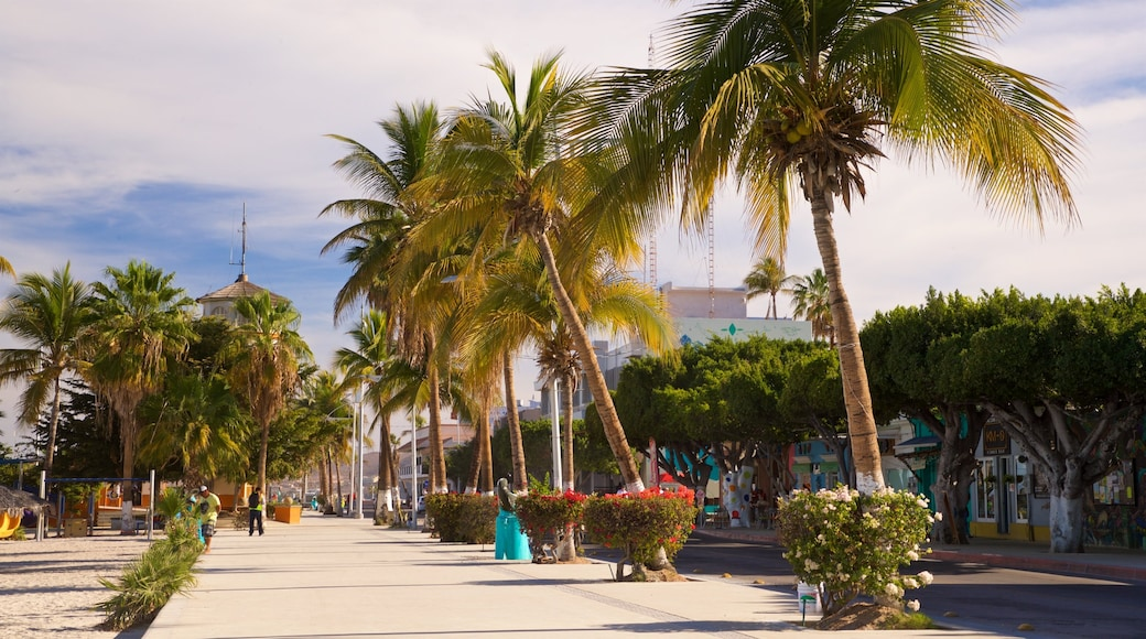 St Maarten and St Martin which includes tropical scenes and wildflowers