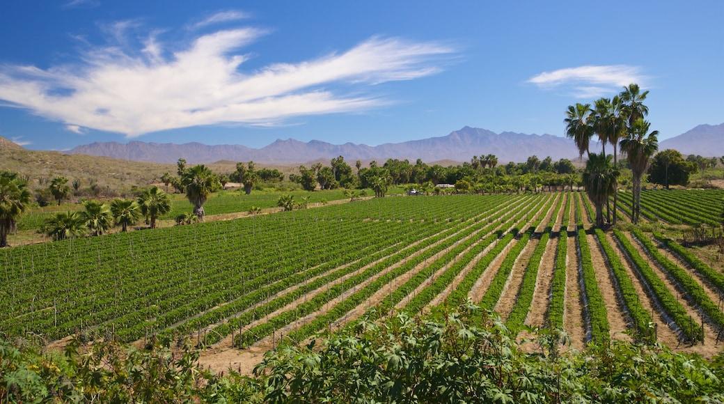 Migrino showing farmland and landscape views