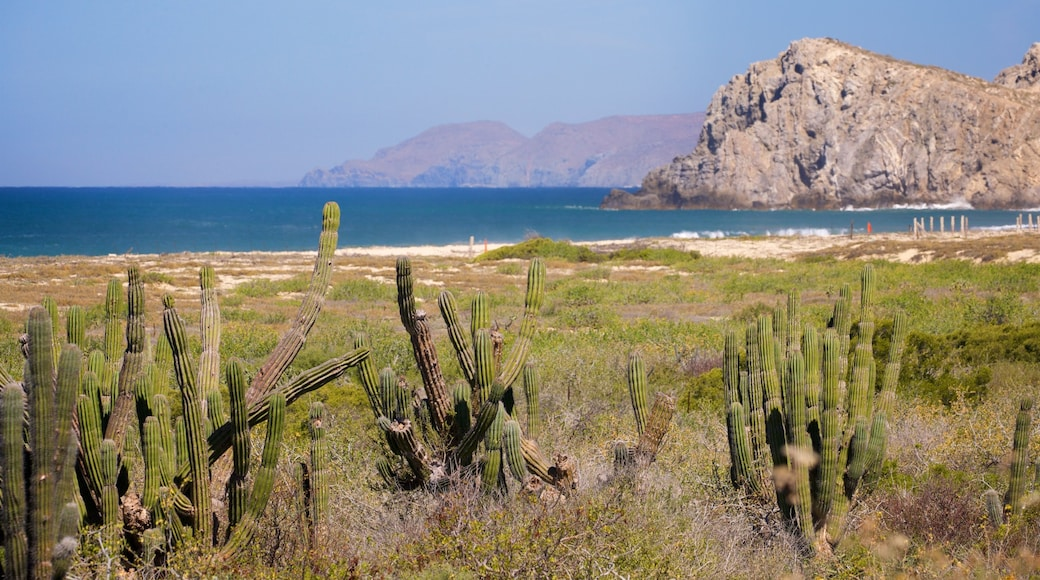 Migrino showing general coastal views