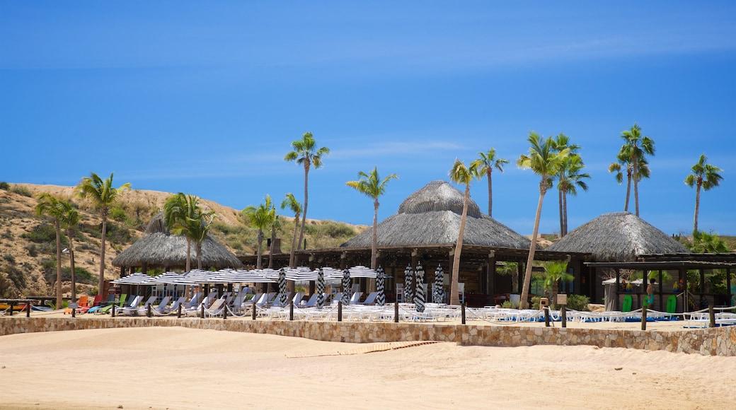 Santa Maria Beach showing tropical scenes, a sandy beach and general coastal views