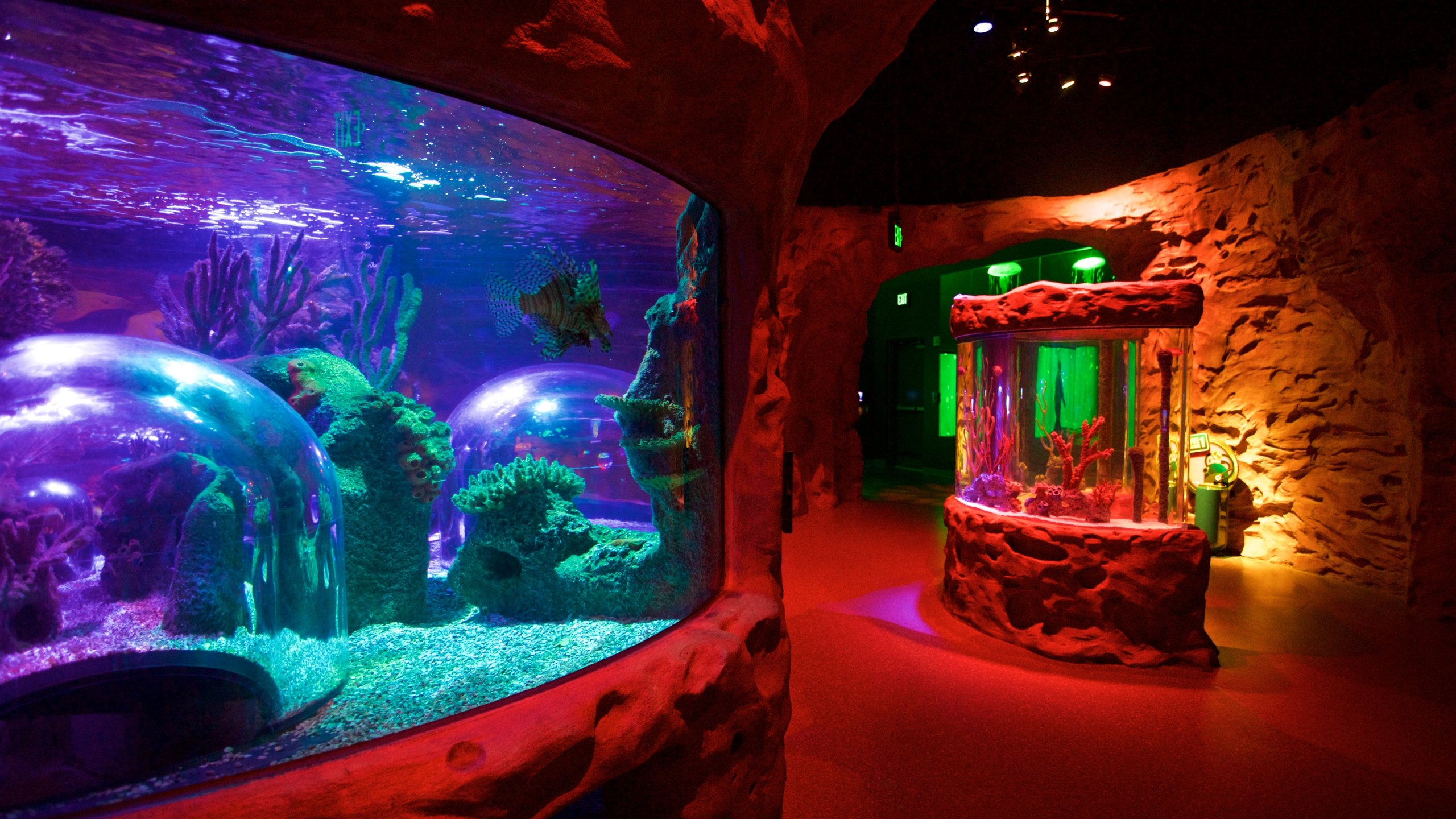 SEA LIFE Orlando Aquarium, Orlando, Florida, United States of America