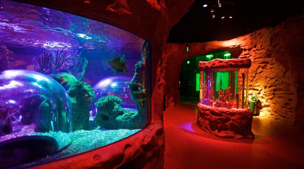 SEA LIFE Orlando Aquarium which includes interior views and marine life
