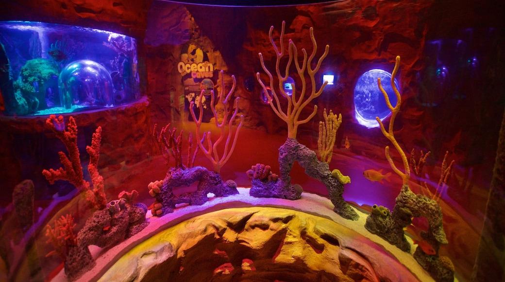 SEA LIFE Orlando Aquarium featuring marine life and interior views