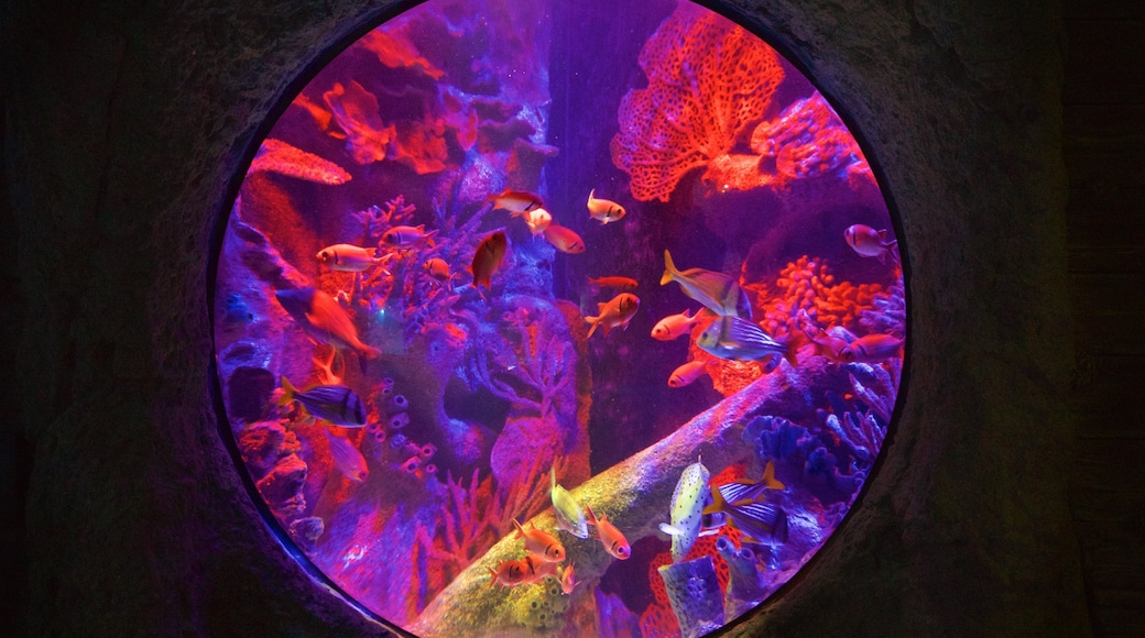 SEA LIFE Orlando Aquarium which includes marine life
