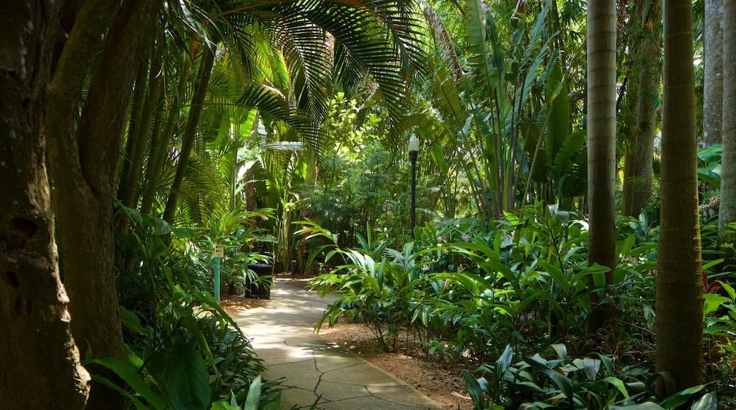 Sunken Gardens showing a garden
