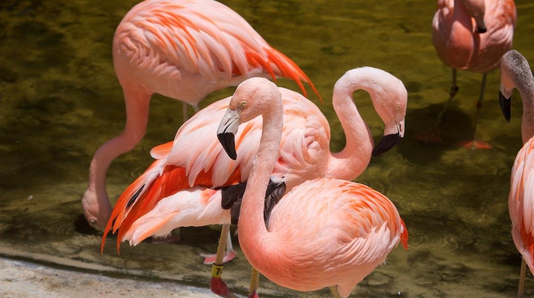 Sunken Gardens which includes bird life