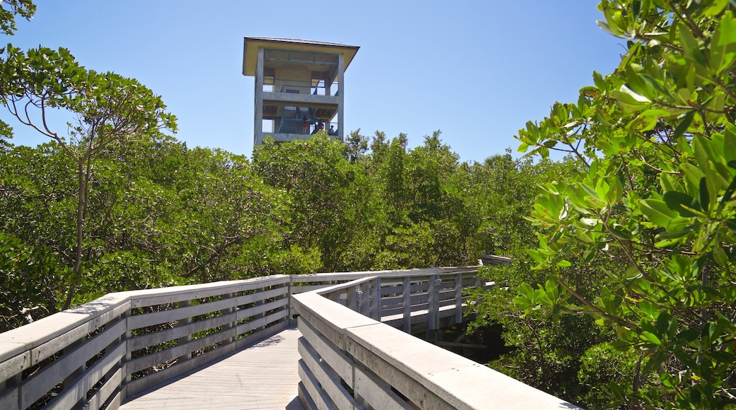 Anne Kolb Nature Center showing forest scenes and a bridge