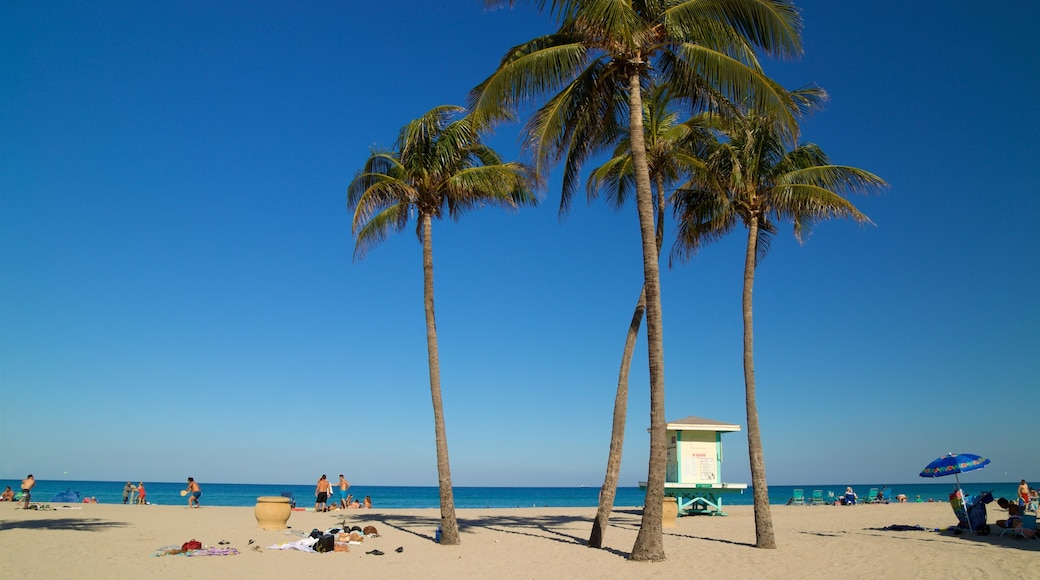 Hollywood Beach showing a beach, general coastal views and tropical scenes