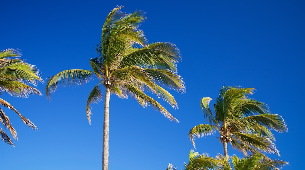 Hollywood Beach featuring tropical scenes