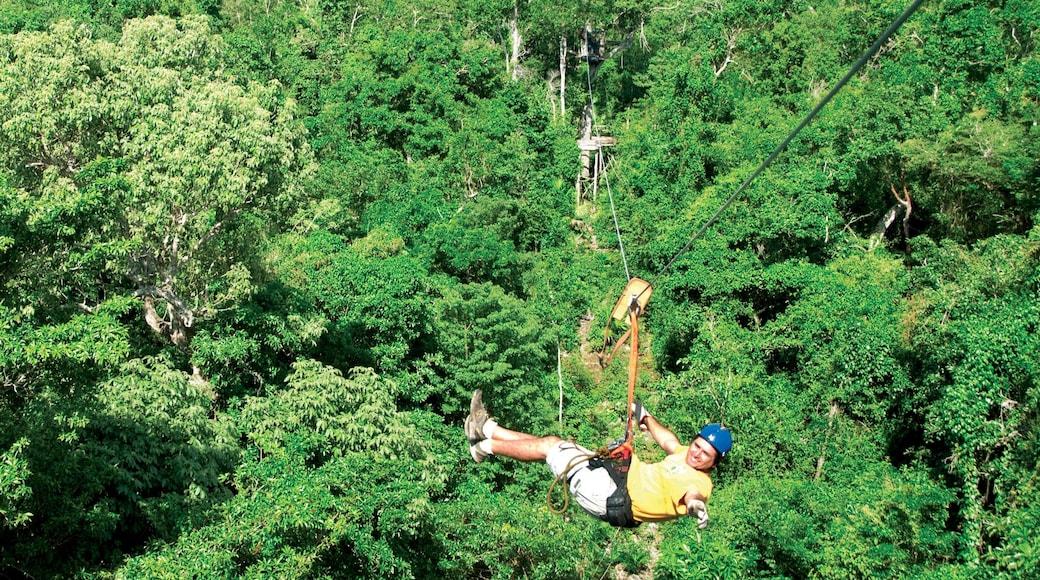 Puerto Morelos mit einem Waldmotive und Seilrutschen sowie einzelner Mann