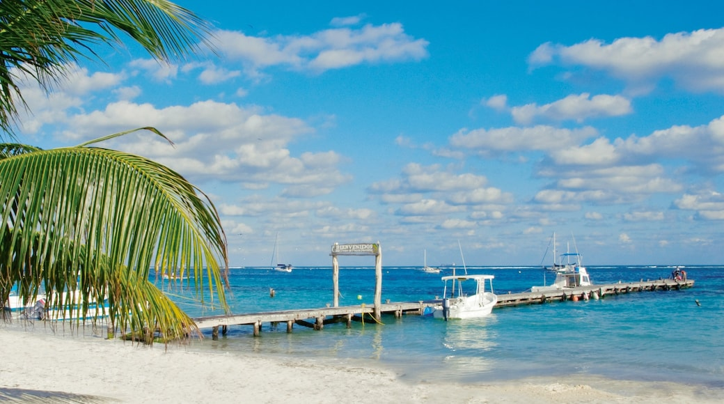 Playa del Carmen which includes a beach, landscape views and tropical scenes
