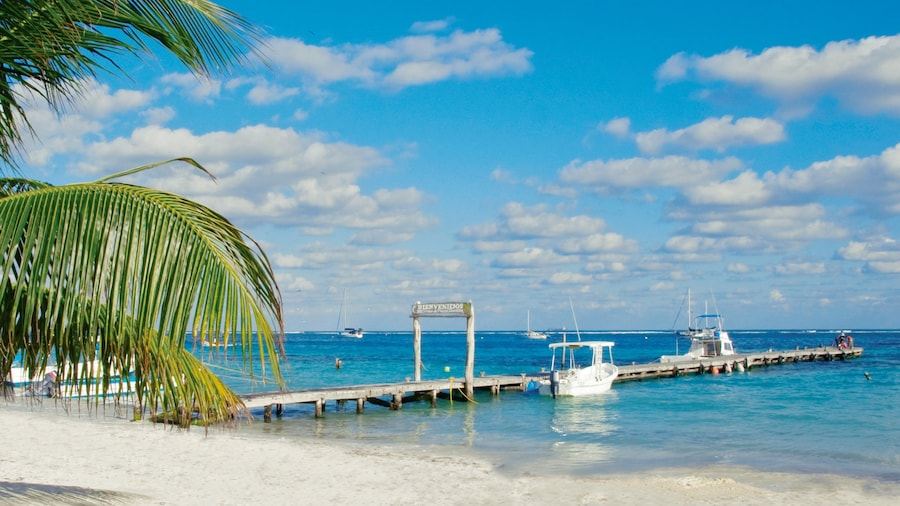 Playa del Carmen showing a sandy beach, landscape views and tropical scenes